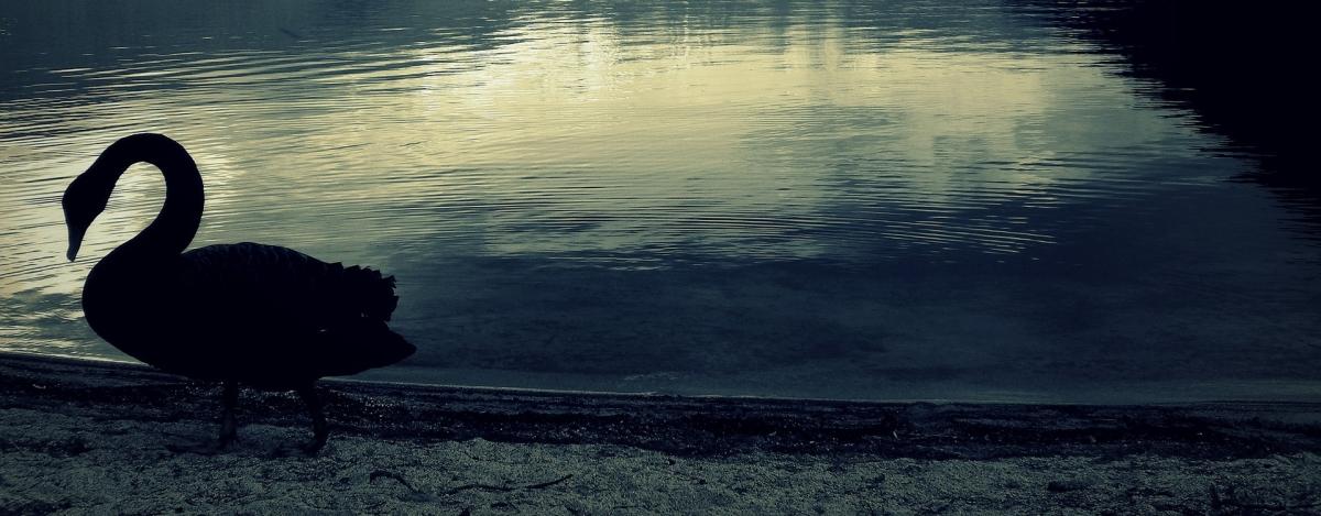 Il 'cigno nero' dellaChiesa